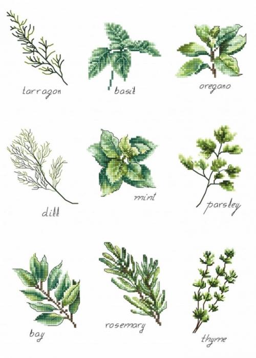 Cпеции и травы